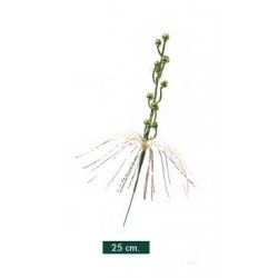 Pick Decorado Verde 25cm